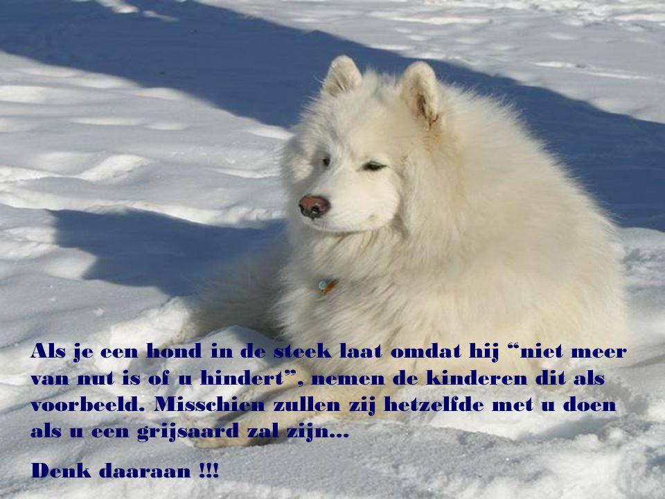 """""""De liefde voor dieren verhoogt het culturele niveau van de mens."""" (F. Salvochea)"""