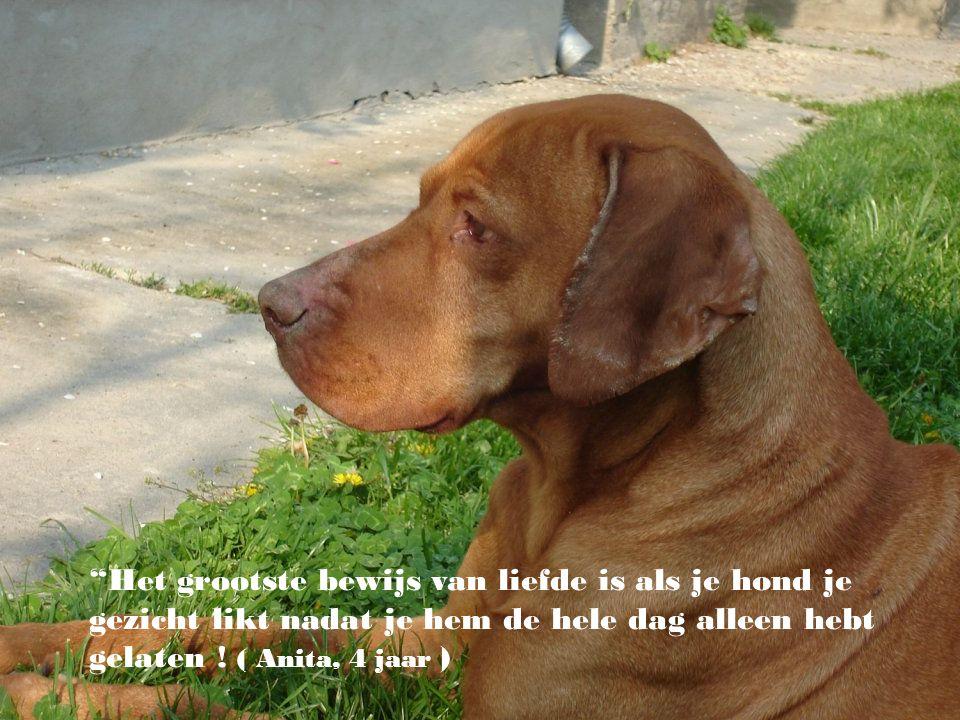 """""""De hond heeft van de mens zijn god gemaakt, als de hond atheïst zou zijn, zou dat perfect zijn."""" ( Paul Valery)"""