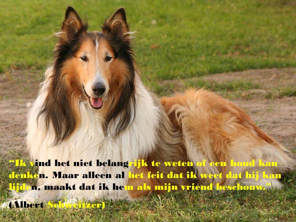 """""""Het grootste bewijs van liefde is als je hond je gezicht likt nadat je hem de hele dag alleen hebt gelaten ! ( Anita, 4 jaar )"""