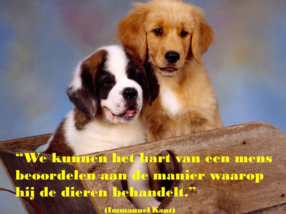 """""""Ik vind het niet belangrijk te weten of een hond kan denken. Maar alleen al het feit dat ik weet dat hij kan lijden, maakt dat ik hem als mijn vriend"""