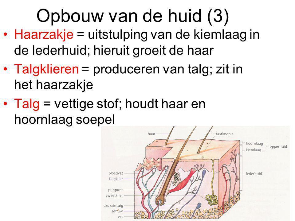 Opbouw van de huid (3) Haarzakje = uitstulping van de kiemlaag in de lederhuid; hieruit groeit de haar Talgklieren = produceren van talg; zit in het h