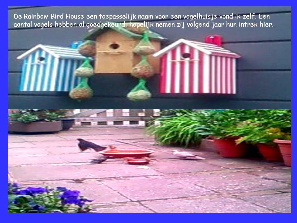 De Rainbow Bird House een toepasselijk naam voor een vogelhuisje vond ik zelf. Een aantal vogels hebben al goedgekeurd, hopelijk nemen zij volgend jaa