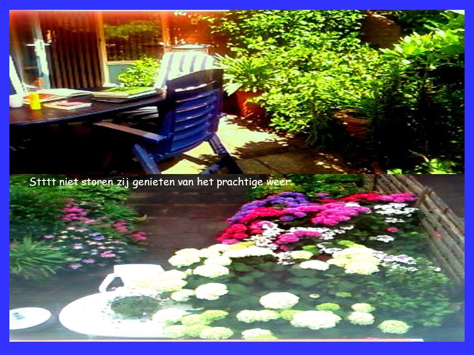 De lelie die verscholen staat achter een laurierplant. Een bloemenoase van Annabelle