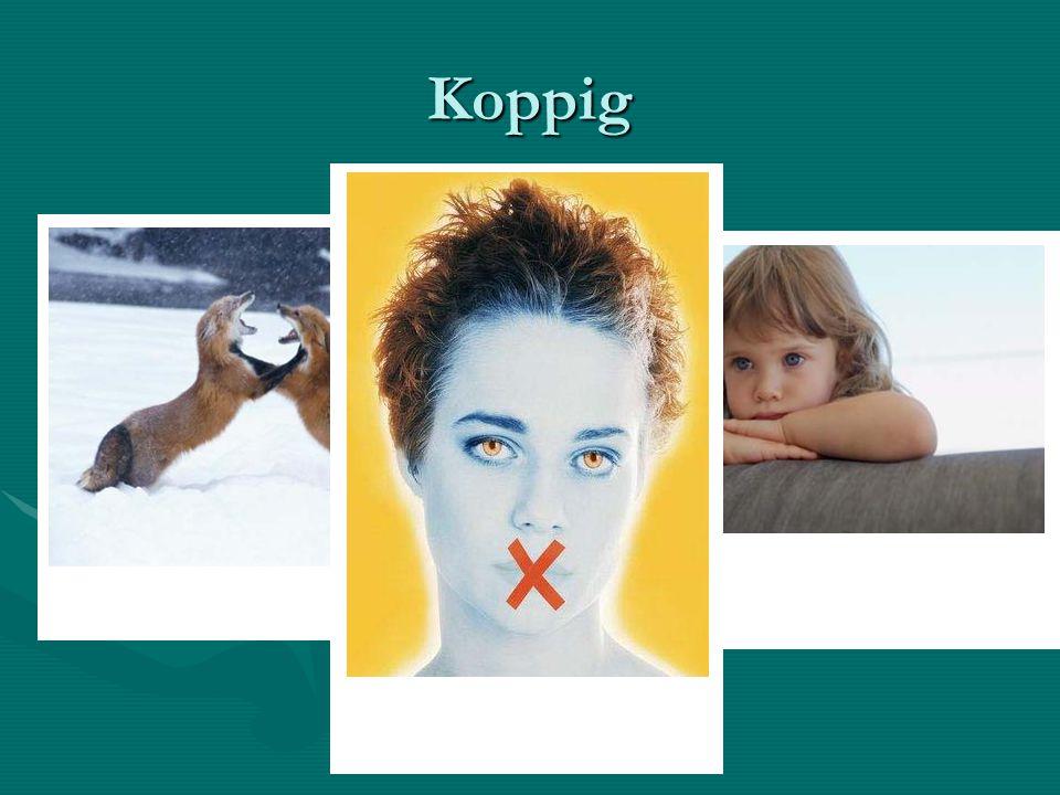Koppig Sorry