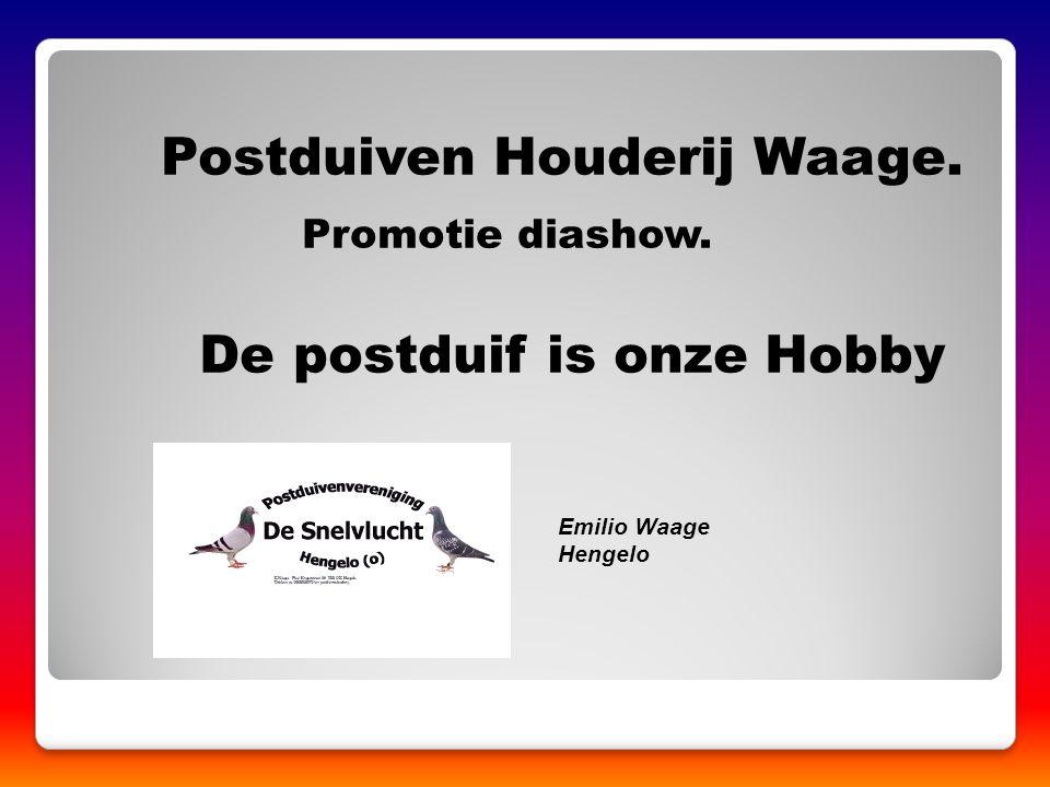 Postduiven Houderij Waage. Promotie diashow. De postduif is onze Hobby Emilio Waage Hengelo