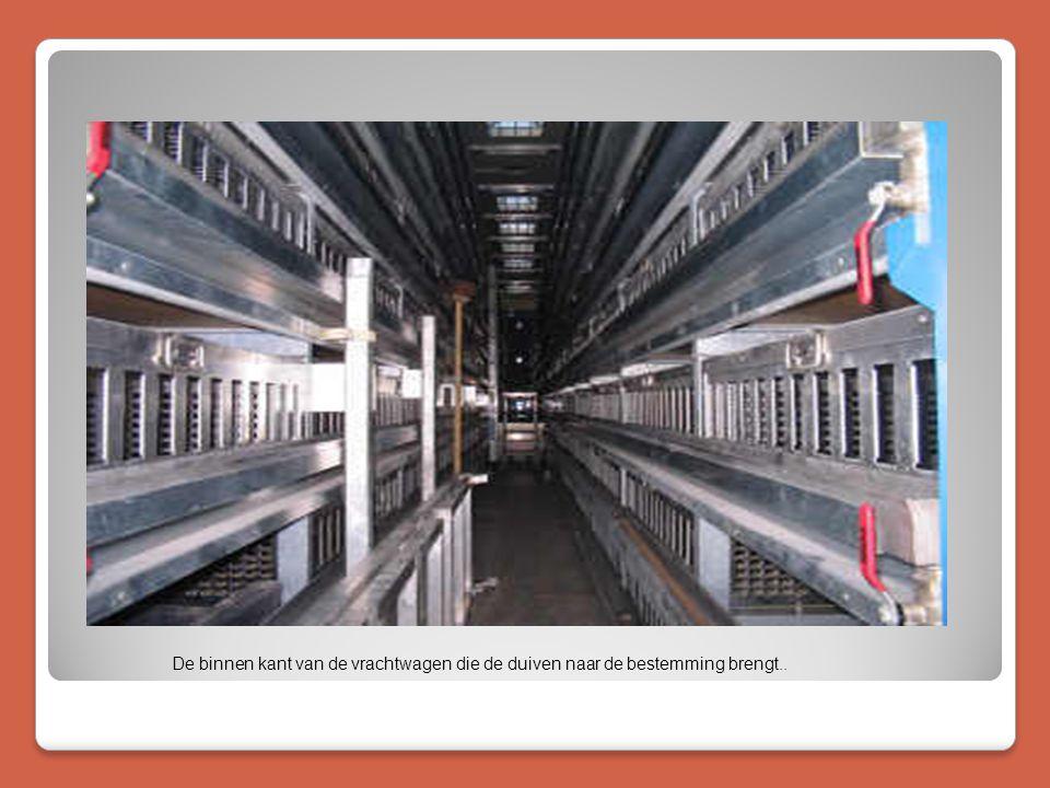De binnen kant van de vrachtwagen die de duiven naar de bestemming brengt..