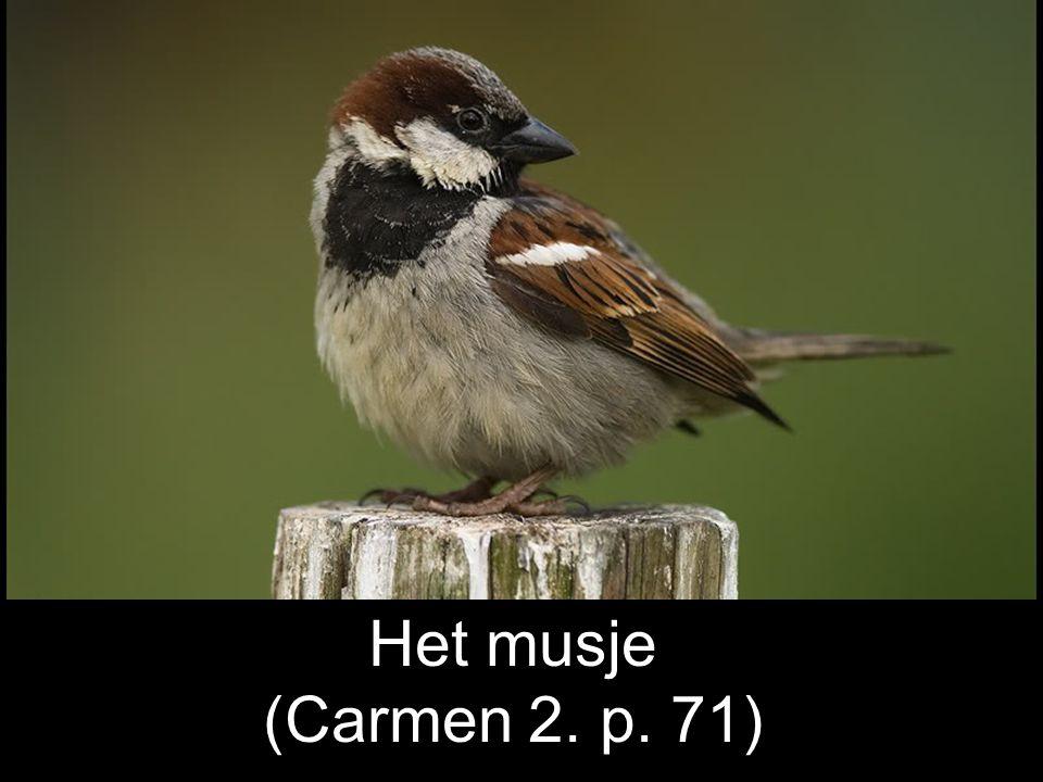Het musje (Carmen 2. p. 71)