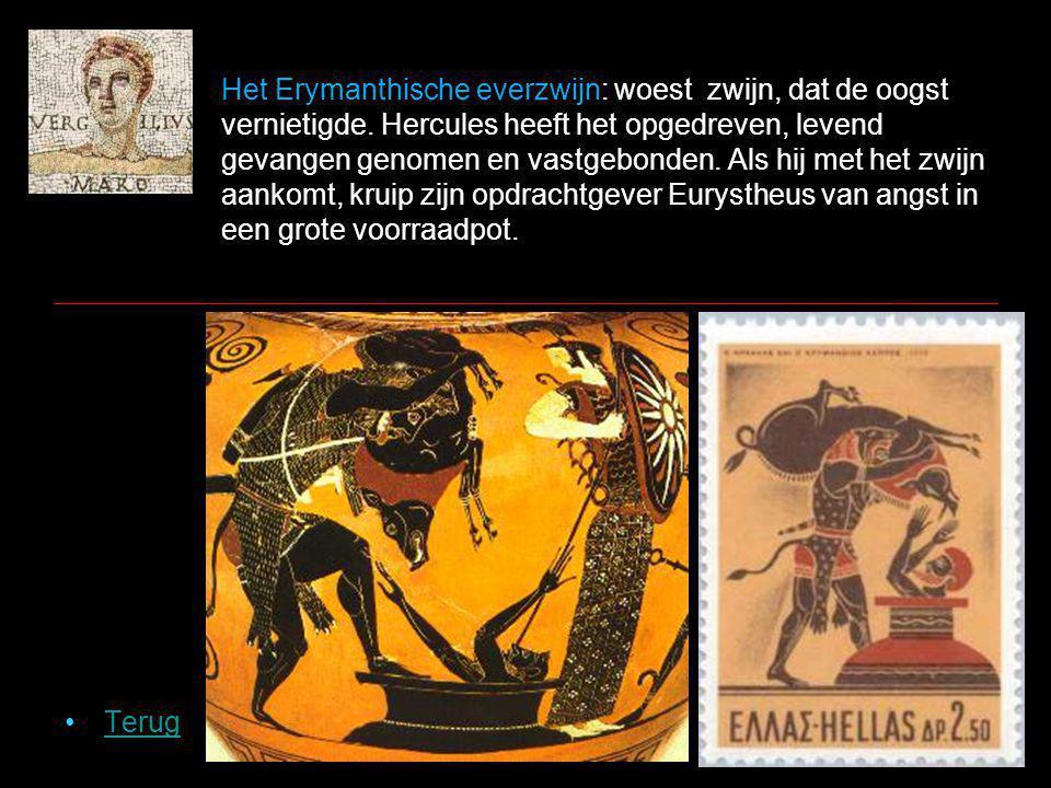 Het Erymanthische everzwijn: woest zwijn, dat de oogst vernietigde.