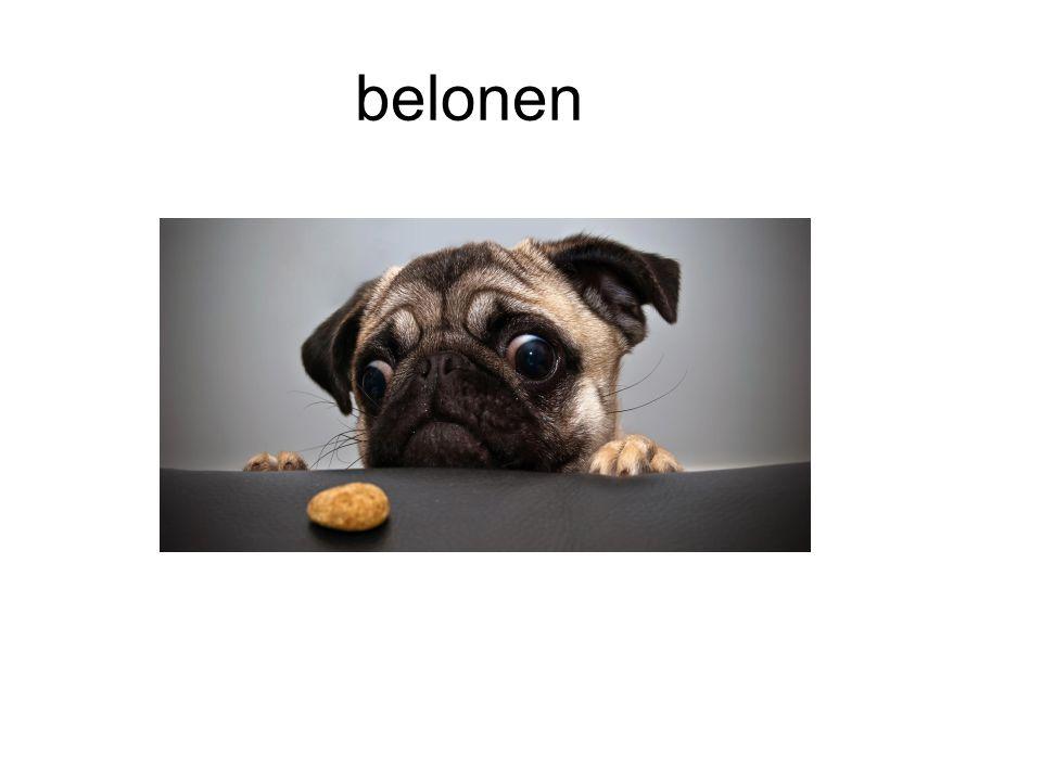 belonen
