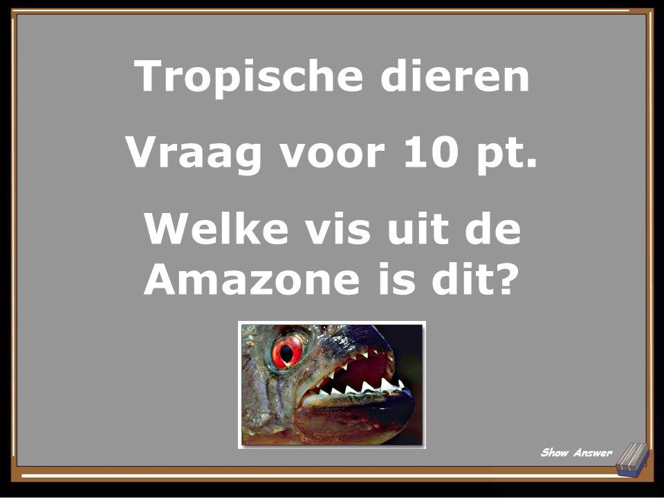 Tropische dieren Antwoord voor 5 pt. Een luiaard Back to Board