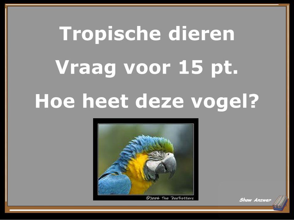 Tropische dieren Antwoord voor 10 pt. Pirhana Back to Board