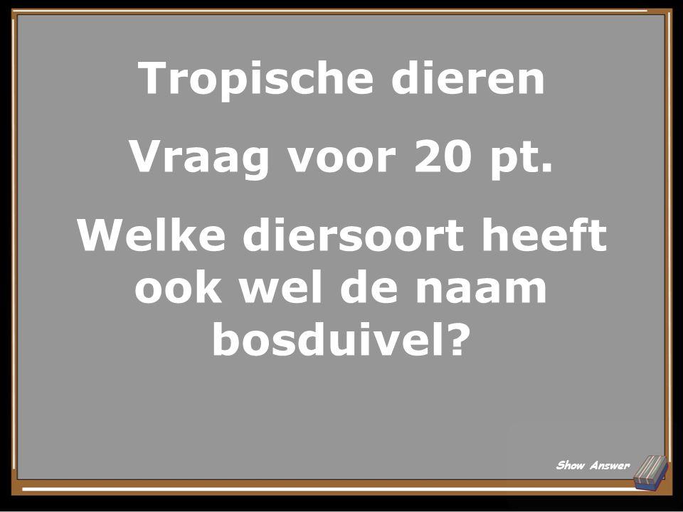 Tropische dieren Antwoord voor 15 pt. (blauwgele) ara Back to Board