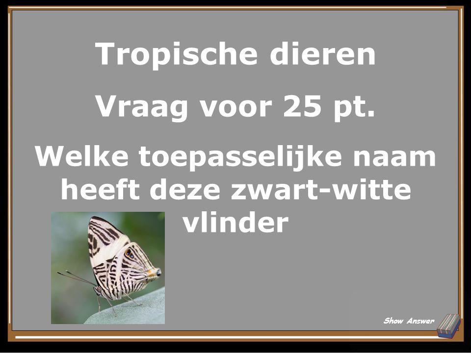 Tropische dieren Antwoord voor 20 pt. Zwarte slingeraap Back to Board