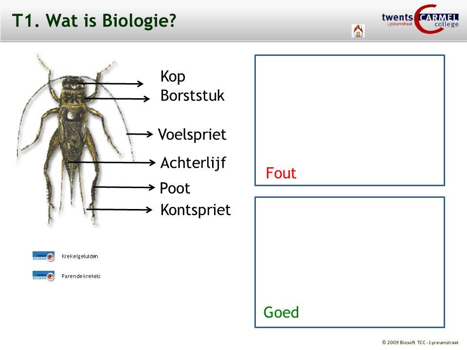 © 2009 Biosoft TCC - Lyceumstraat T1. Wat is Biologie? Fout Voelspriet Kontspriet Kop Borststuk Achterlijf Poot Krekelgeluiden Parende krekels Fout Go