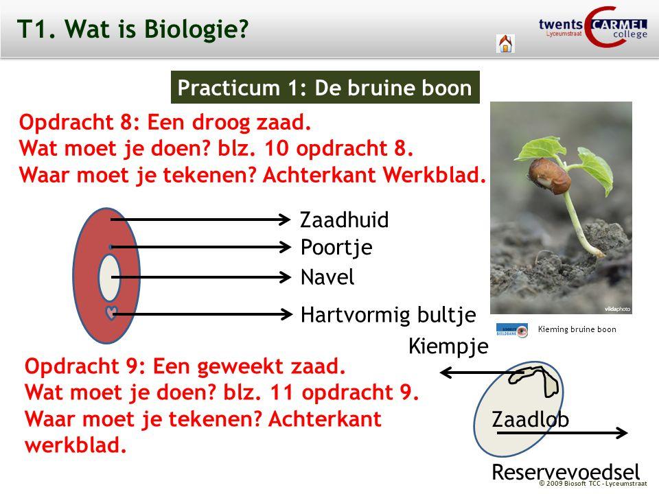 © 2009 Biosoft TCC - Lyceumstraat T1. Wat is Biologie? Practicum 1: De bruine boon Opdracht 8: Een droog zaad. Wat moet je doen? blz. 10 opdracht 8. W