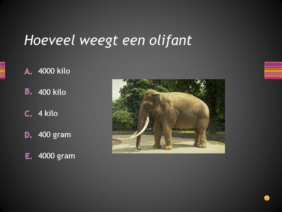 Hoeveel weegt een olifant 4000 gram 400 gram 4 kilo 400 kilo 4000 kilo