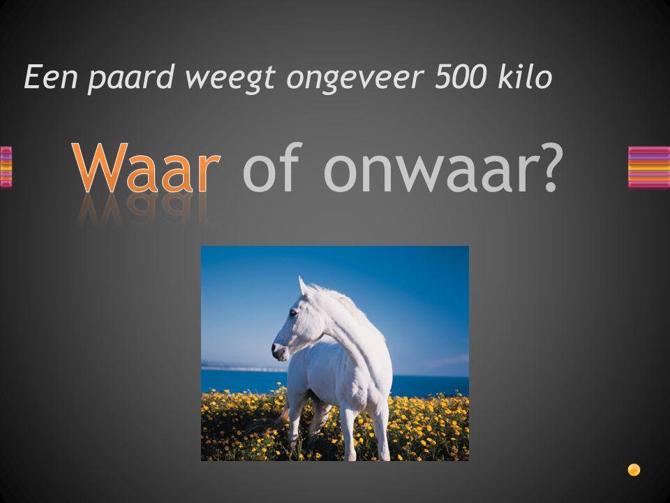 Waar of onwaar? Een paard weegt ongeveer 500 kilo