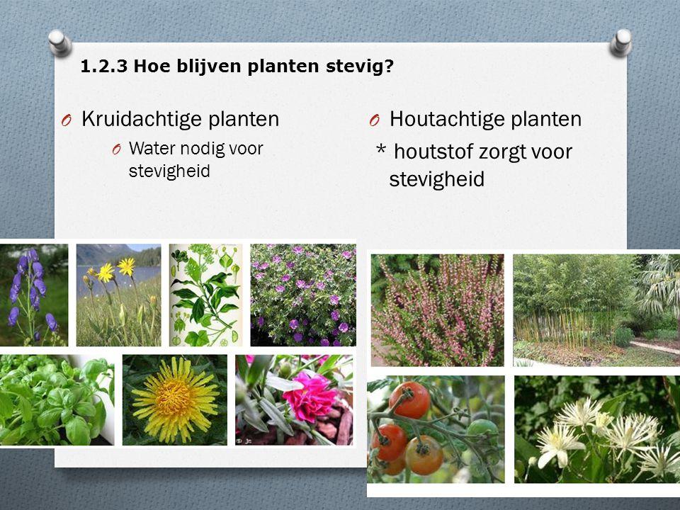 1.2.3 Hoe blijven planten stevig? O Kruidachtige planten O Water nodig voor stevigheid O Houtachtige planten * houtstof zorgt voor stevigheid