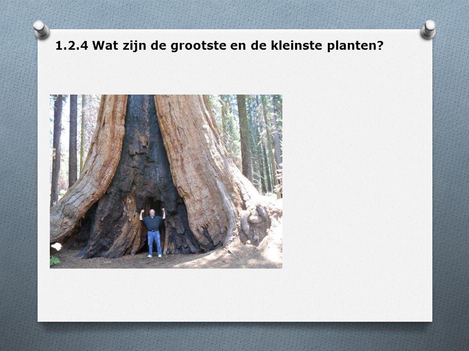 1.2.4 Wat zijn de grootste en de kleinste planten?