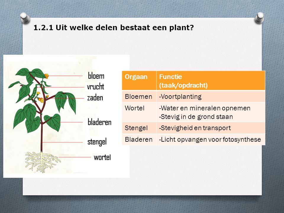 OrgaanFunctie (taak/opdracht) Bloemen-Voortplanting Wortel-Water en mineralen opnemen -Stevig in de grond staan Stengel-Stevigheid en transport Bladeren-Licht opvangen voor fotosynthese