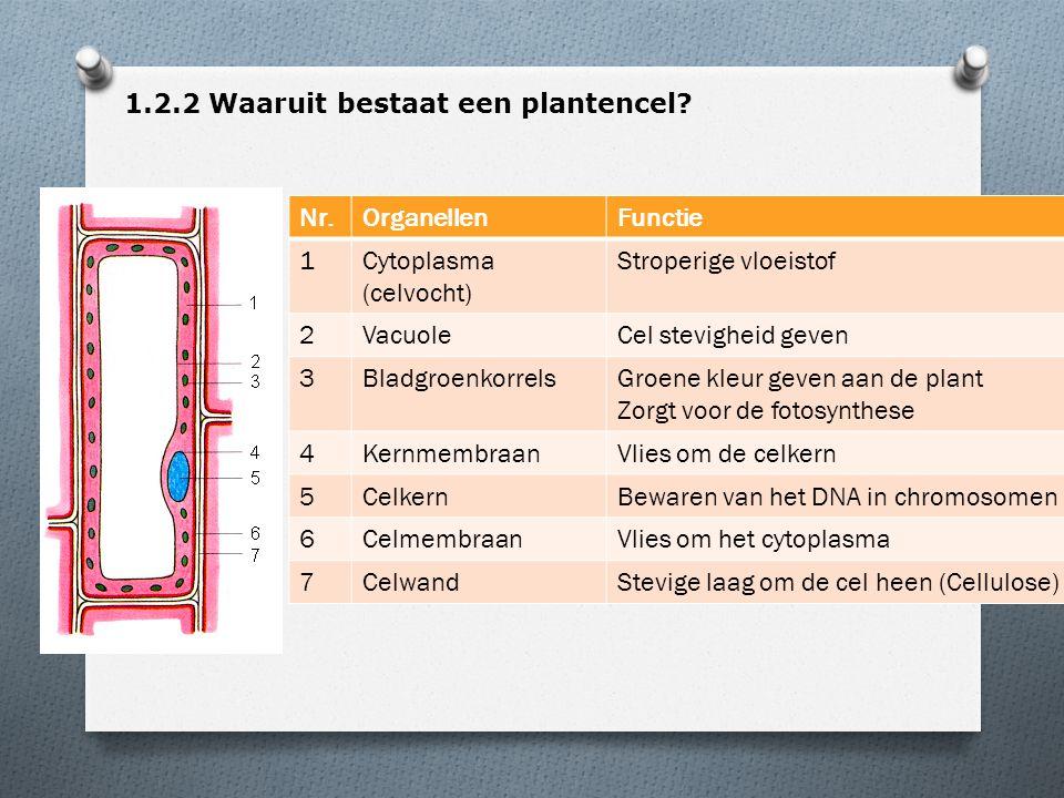 1.2.2 Waaruit bestaat een plantencel? Nr.OrganellenFunctie 1Cytoplasma (celvocht) Stroperige vloeistof 2VacuoleCel stevigheid geven 3BladgroenkorrelsG