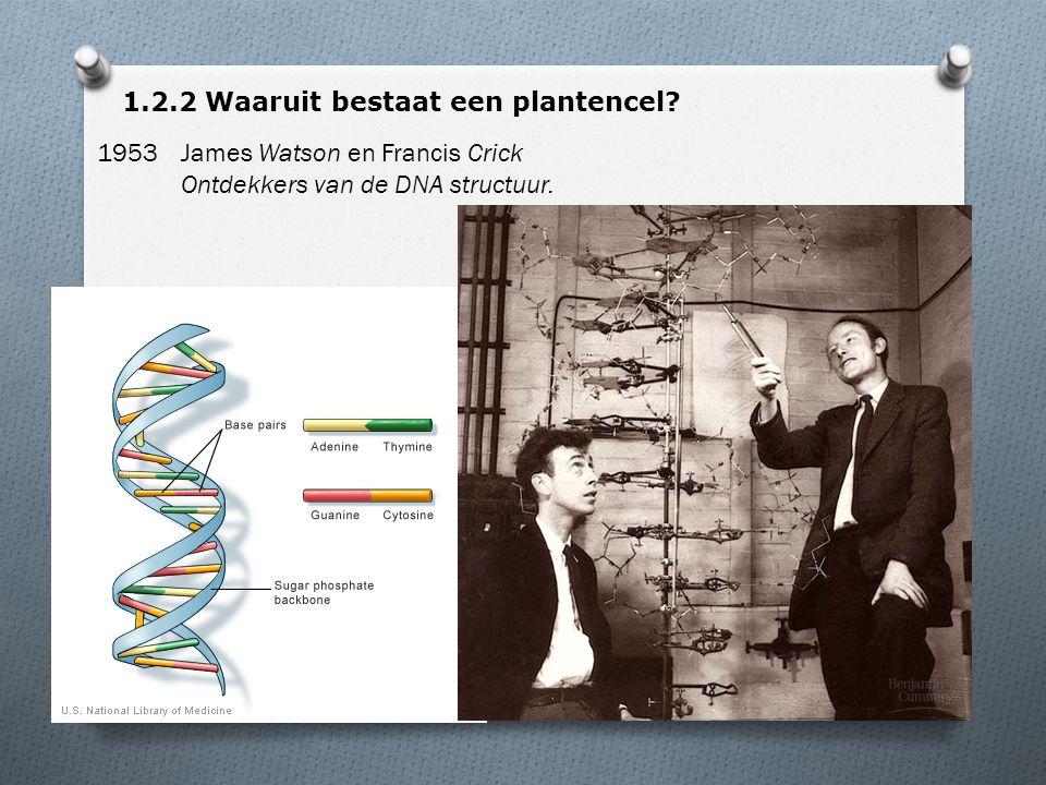 1.2.2 Waaruit bestaat een plantencel? 1953James Watson en Francis Crick Ontdekkers van de DNA structuur.