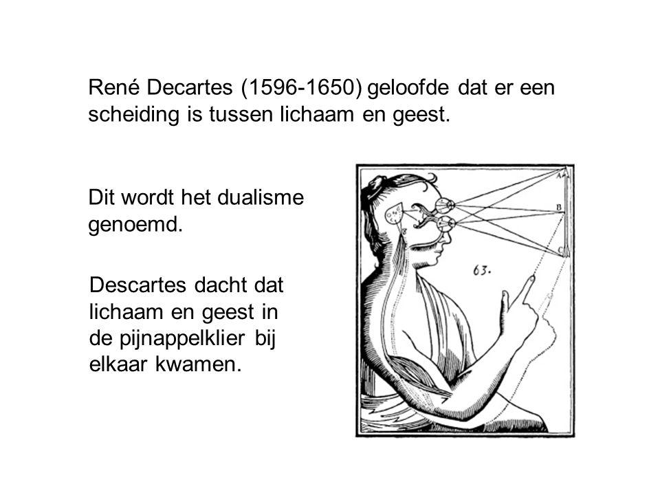 René Decartes (1596-1650) geloofde dat er een scheiding is tussen lichaam en geest. Dit wordt het dualisme genoemd. Descartes dacht dat lichaam en gee