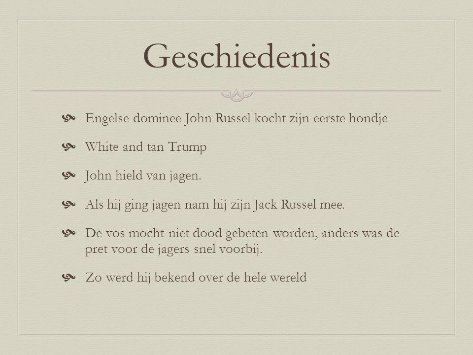 Geschiedenis  Engelse dominee John Russel kocht zijn eerste hondje  White and tan Trump  John hield van jagen.