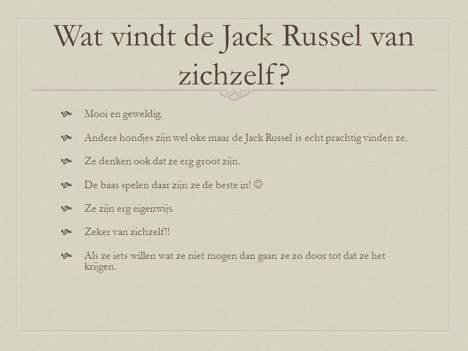 Wat vindt de Jack Russel van zichzelf. Mooi en geweldig.