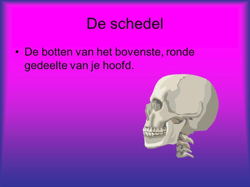De schedel De botten van het bovenste, ronde gedeelte van je hoofd.