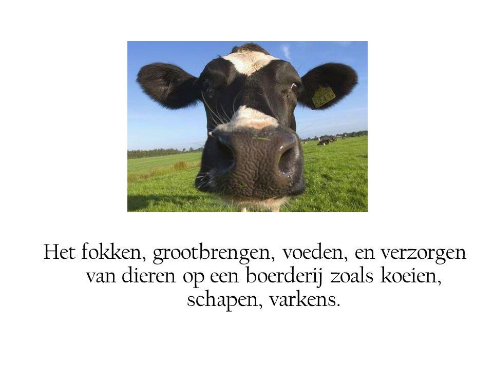Het fokken, grootbrengen, voeden, en verzorgen van dieren op een boerderij zoals koeien, schapen, varkens.