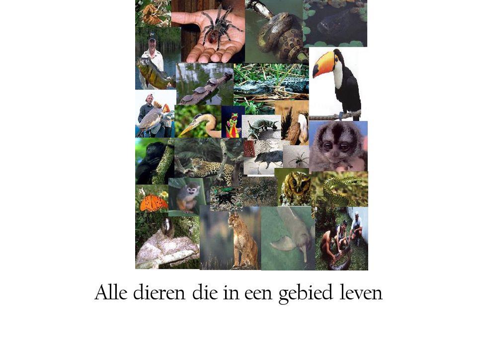 Alle dieren die in een gebied leven