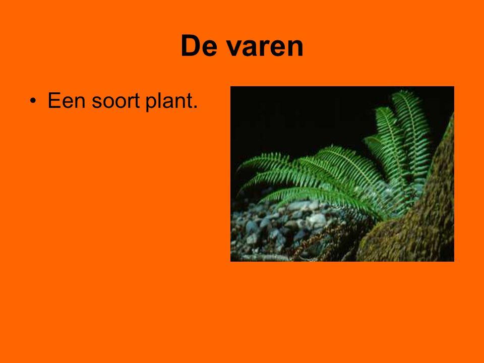 De varen Een soort plant.