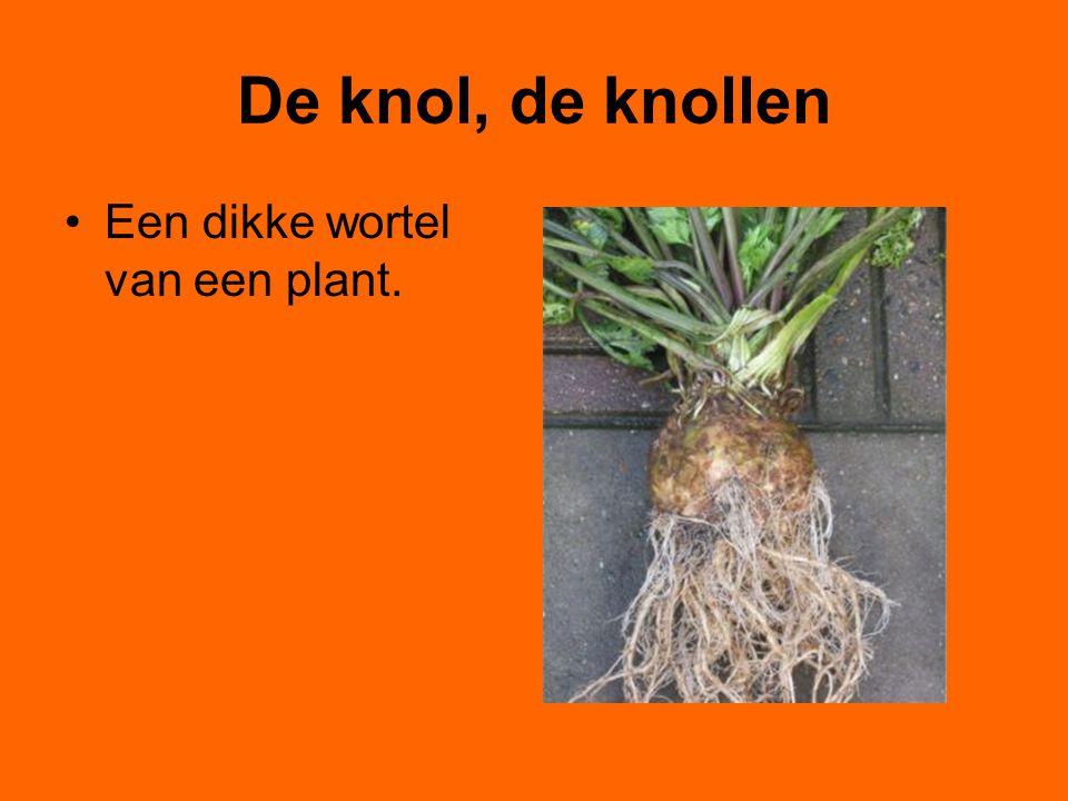 De knol, de knollen Een dikke wortel van een plant.
