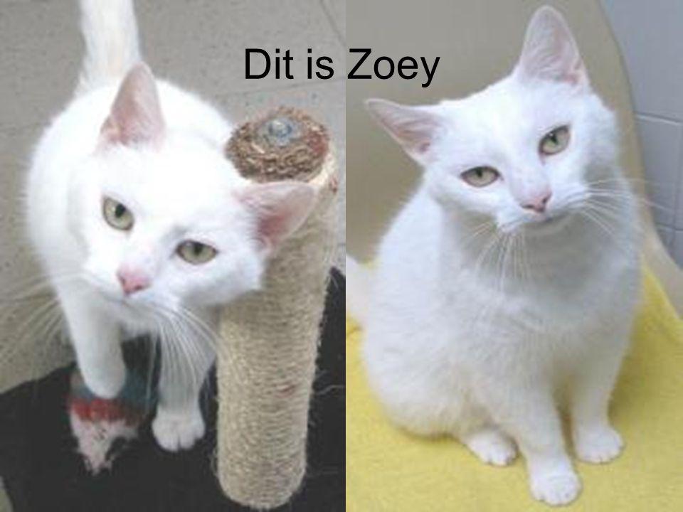 Dit is Zoey
