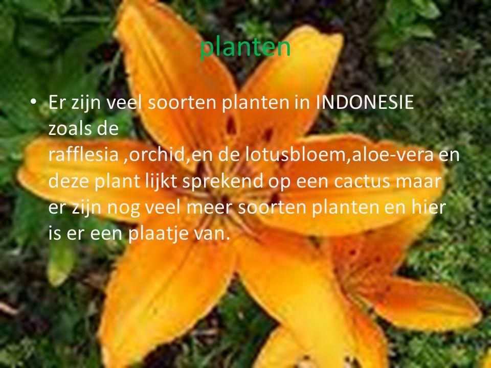 BOMEN En net zoals dieren zijn er veel verschillende bomen, De palmboom,bananenboom,teakboom,de Agatish dammara en de Ebbeboom,bosvlam. De bomen kunne