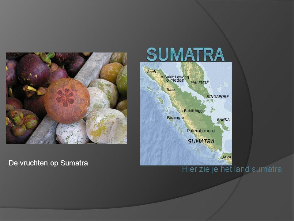 Hier zie je het land sumatra De vruchten op Sumatra