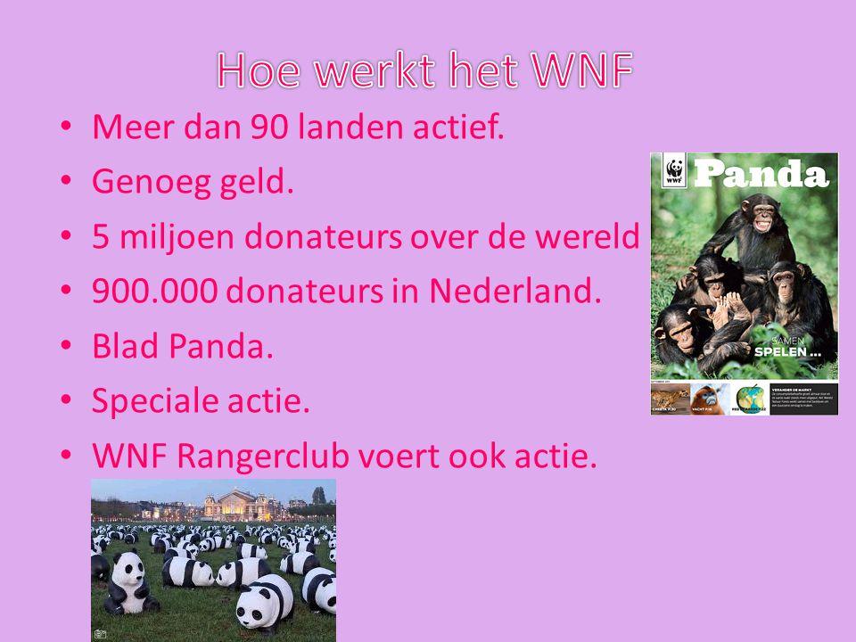 Meer dan 90 landen actief. Genoeg geld. 5 miljoen donateurs over de wereld 900.000 donateurs in Nederland. Blad Panda. Speciale actie. WNF Rangerclub