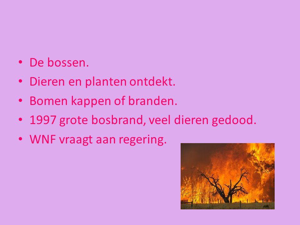 De bossen. Dieren en planten ontdekt. Bomen kappen of branden. 1997 grote bosbrand, veel dieren gedood. WNF vraagt aan regering.