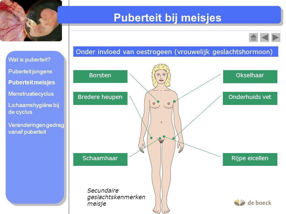 Puberteit bij meisjes Onder invloed van oestrogeen (vrouwelijk geslachtshormoon) Secundaire geslachtskenmerken meisje Okselhaar Borsten Onderhuids vet