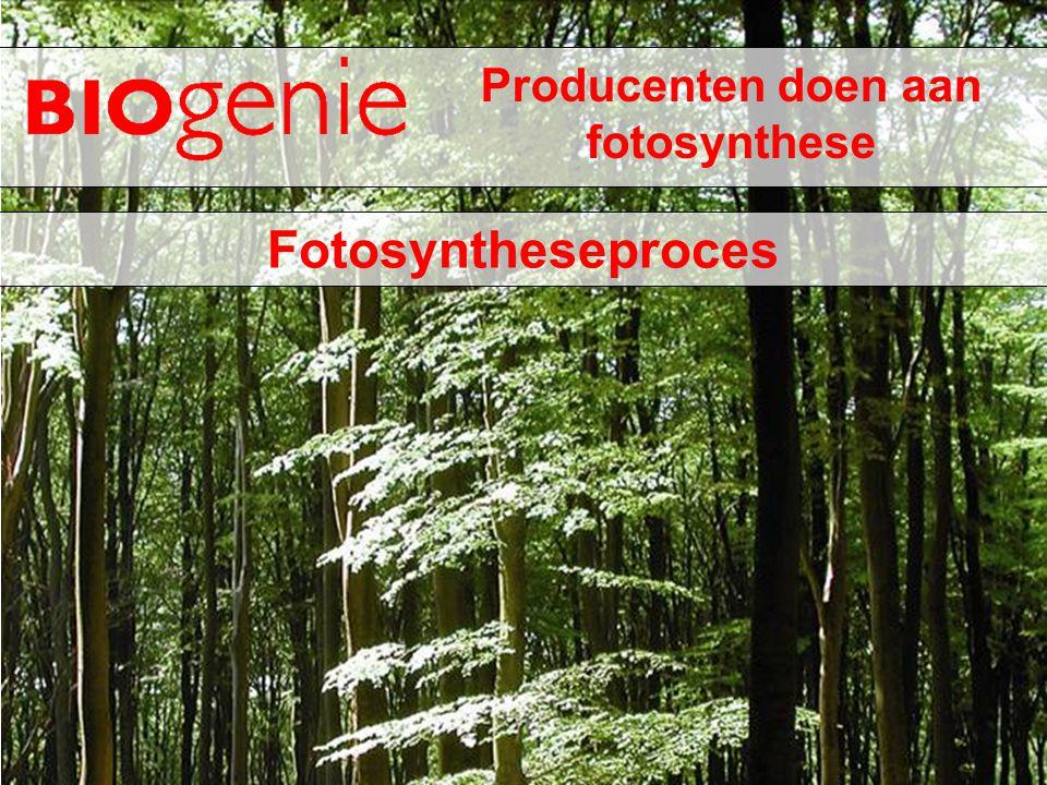 Het belang van lichtenergie Een plant heeft licht nodig: om te groeien; groene kleurstof aan te maken; suiker aan te maken.