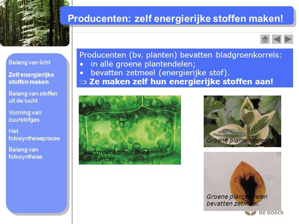 Belang van stoffen uit de lucht Koolstofdioxide (CO 2 ) is belangrijk voor de fotosynthese.