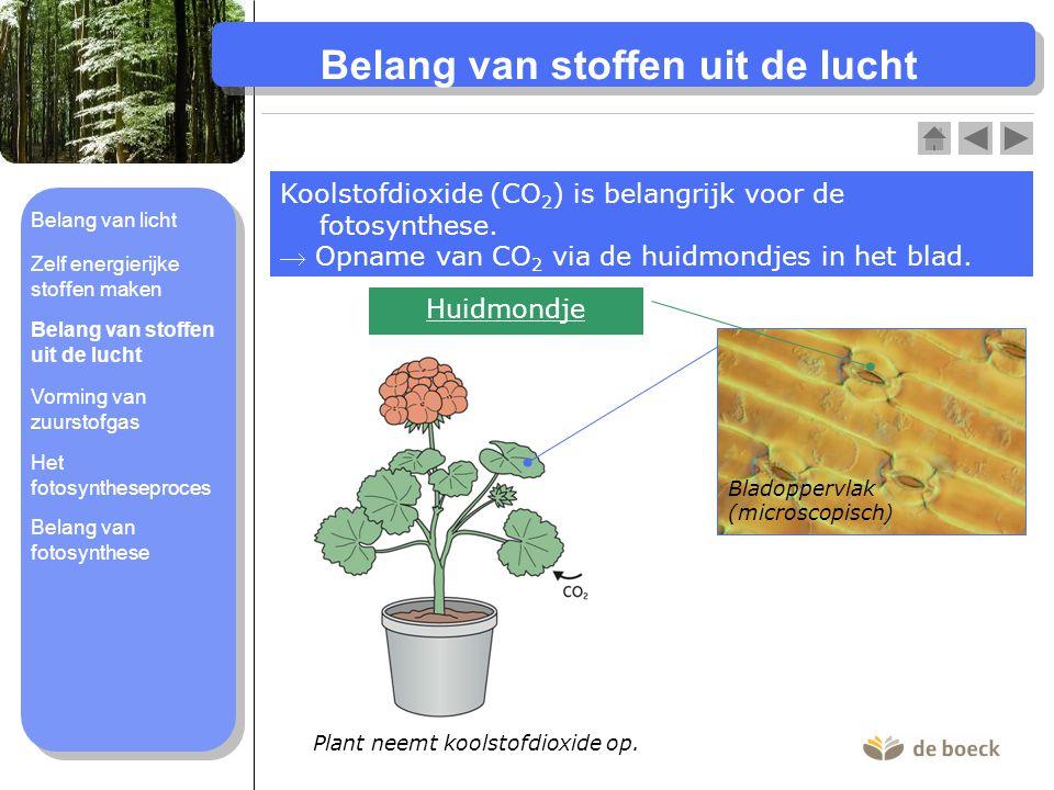 Vorming van zuurstofgas (O 2 -gas) Tijdens de fotosynthese wordt er ook zuurstofgas (O 2 - gas) gevormd bij voldoende licht.