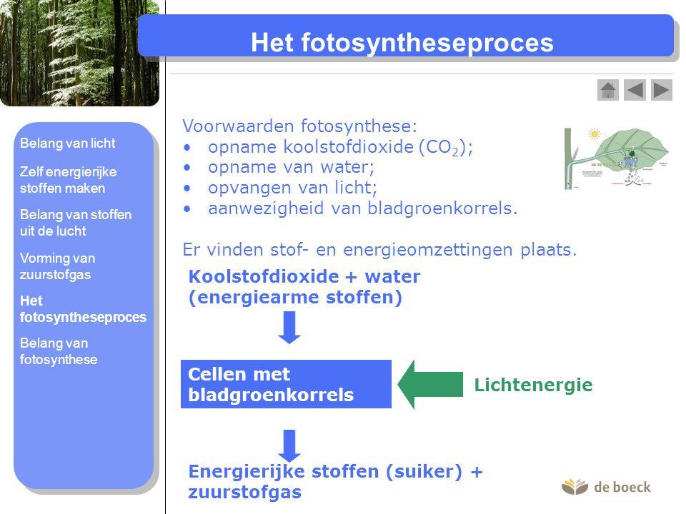 Het fotosyntheseproces Voorwaarden fotosynthese: opname koolstofdioxide (CO 2 ); opname van water; opvangen van licht; aanwezigheid van bladgroenkorrels.
