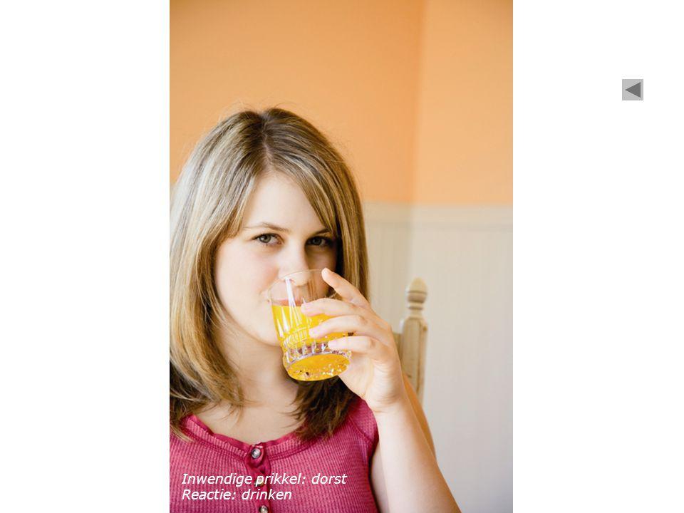 Het oor Het oog Inwendige prikkel: dorst Reactie: drinken