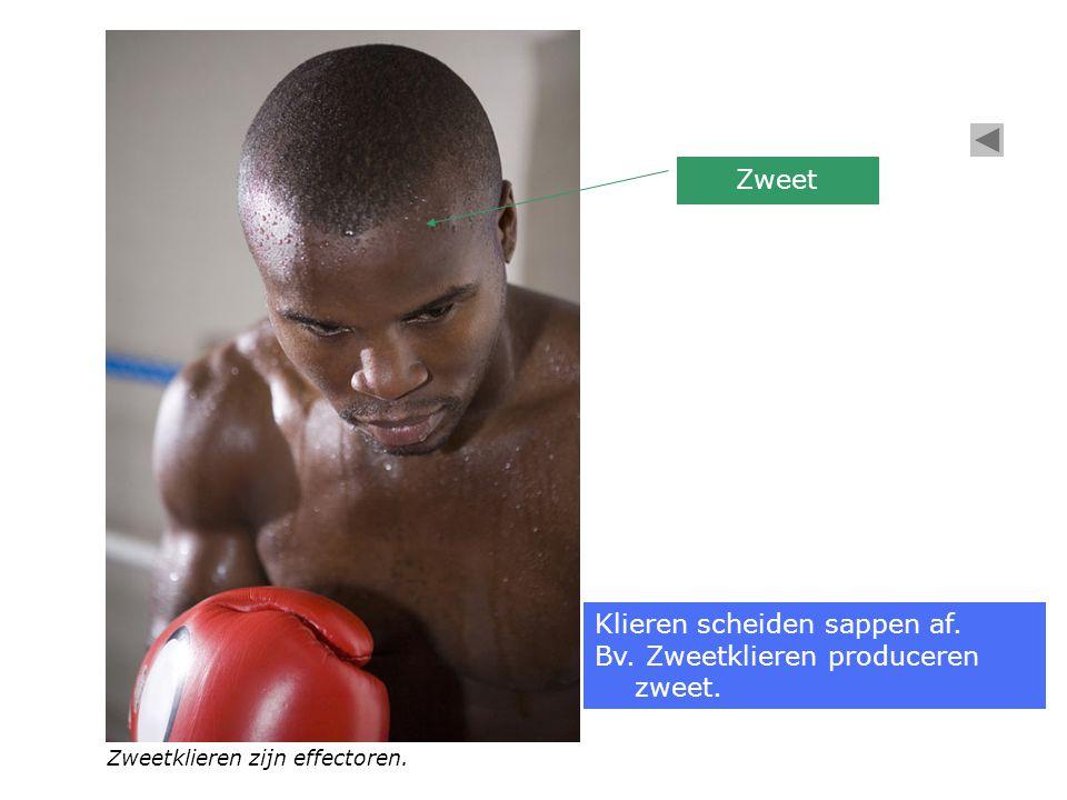 Zweet Zweetklieren zijn effectoren. Klieren scheiden sappen af. Bv. Zweetklieren produceren zweet.