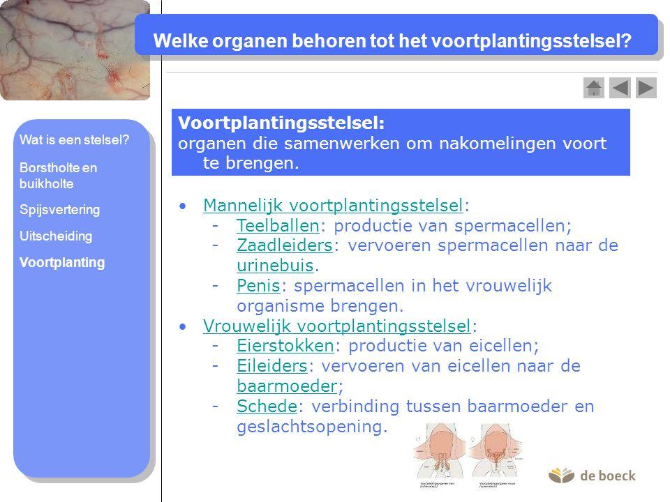 Welke organen behoren tot het voortplantingsstelsel.