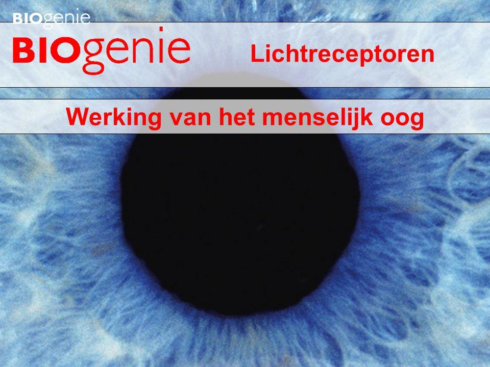 Werking van het menselijk oog Lichtreceptoren