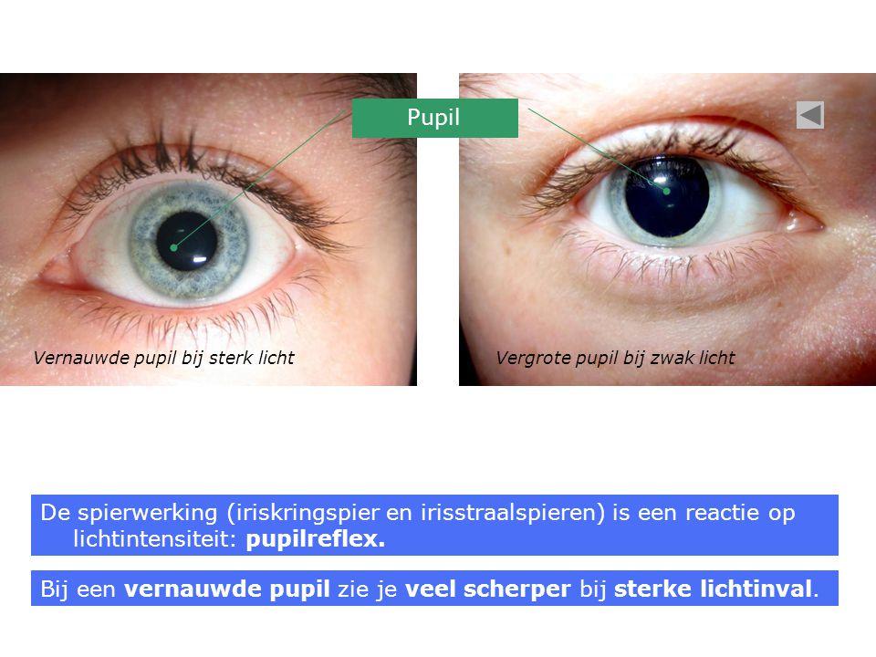 Vernauwde pupil bij sterk lichtVergrote pupil bij zwak licht De spierwerking (iriskringspier en irisstraalspieren) is een reactie op lichtintensiteit: pupilreflex.