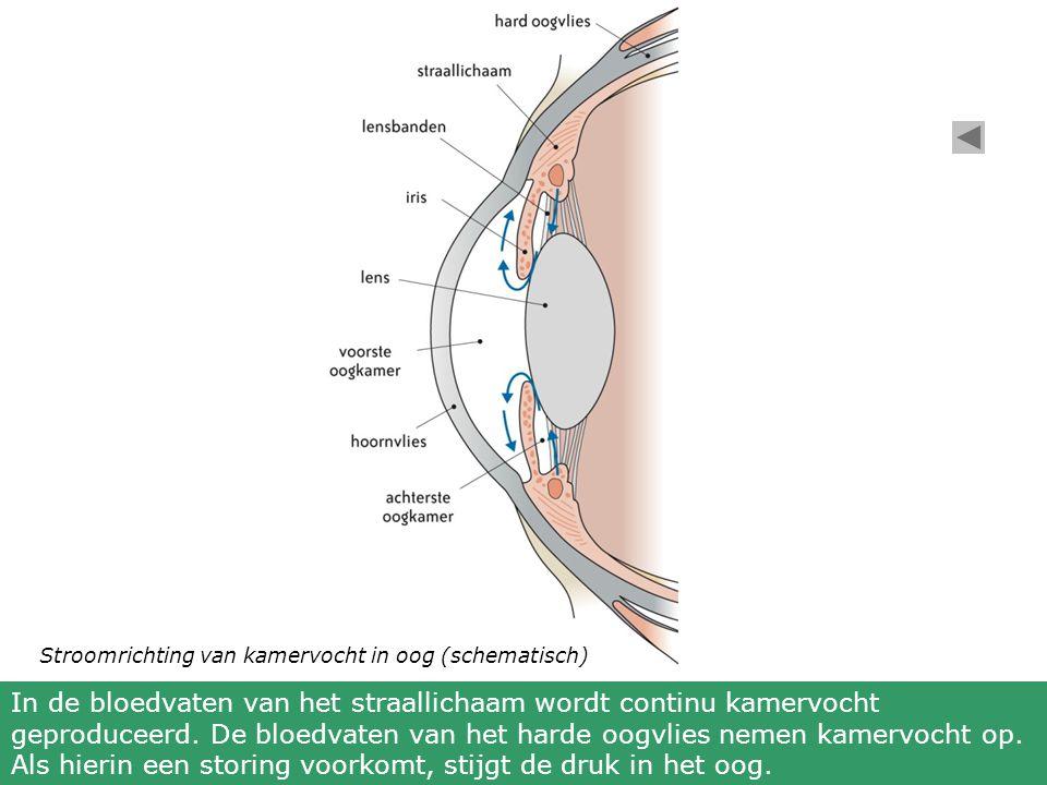 In de bloedvaten van het straallichaam wordt continu kamervocht geproduceerd.